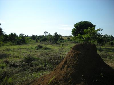 uganda-shikichi.jpg